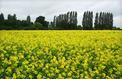 Pas de flambée des prix agricoles en vue sur la prochaine décennie