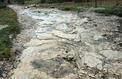 Un dinosaure géant de 35 mètres a laissé des traces dans le Jura