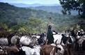 En Éthiopie, les bergers combattants de la vallée de l'Omo