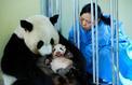 Beauval, la plus grande maternité zoologique de France