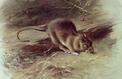 En 1901, Paris organisait un concours pour éliminer les rats