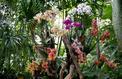 Exposition «Mille & une orchidées»: ne ratez pas la saison 6 !