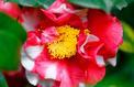 Saint-Valentin: dites-le avec des fleurs de saison