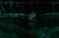 La Forme de l'eau, enchantements aquatiques