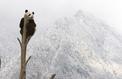 Climat : la moitié des animaux et des plantes pourraient disparaître