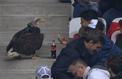Mefi, l'aigle de l'OGC Nice, se perd dans les tribunes de l'Allianz Riviera