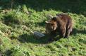 Nicolas Hulot se frotte à l'épineuse réintroduction de l'ours dans les Pyrénées