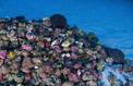 Brésil : un récif de l'Amazone pourrait empêcher des projets pétroliers de Total