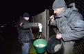 La traque musclée contre les braconniers de bébés anguilles