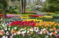 Immersion au Keukenhof, le paradis hollandais des tulipes