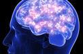 Les neurones se renouvellent-ils?