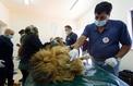 «Moi, Amir Khalil: vétérinaire de guerre»