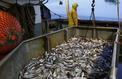 Des ports bloqués pour protester contre la pêche électrique