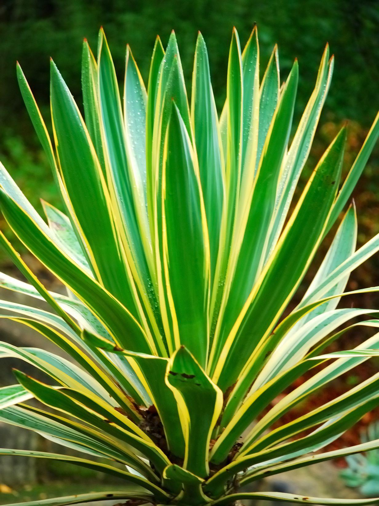 orchid es plantes vertes cultivez votre jardin int rieur. Black Bedroom Furniture Sets. Home Design Ideas