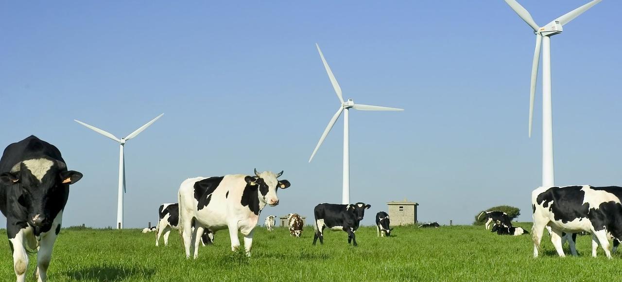 Qu'il s'agisse du bruit ou des champs électromagnétiques, aucune étude n'est encore venu scientifiquement établir que les éoliennes avaient un impact nocif sur les animaux, même si des «zones grises» sont admises.