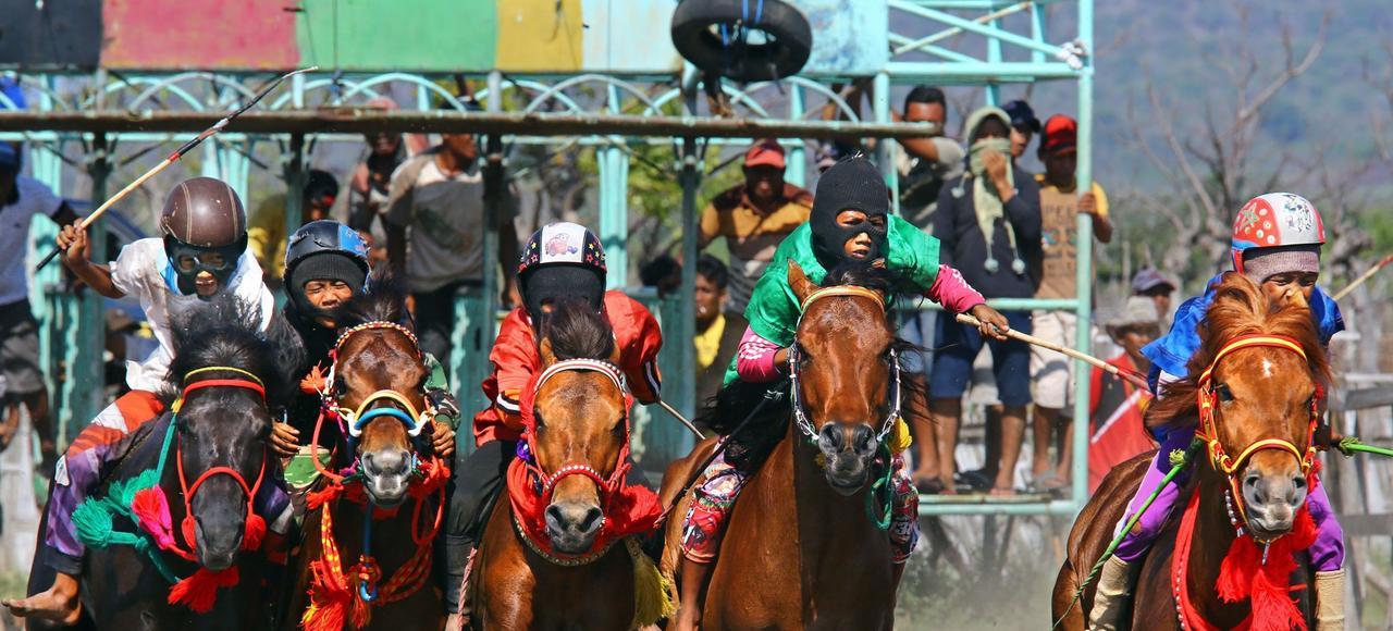 Sous le regard des parents des jockeys et des propriétaires, les chevaux se ruent sur la piste pour l'une des quelques 200 épreuves courues pendant les 10 jours que dure la réunion de Sumbawa Besar. Quatorze rassemblements sont organisés chaque année sur l'ile de Sumbawa.