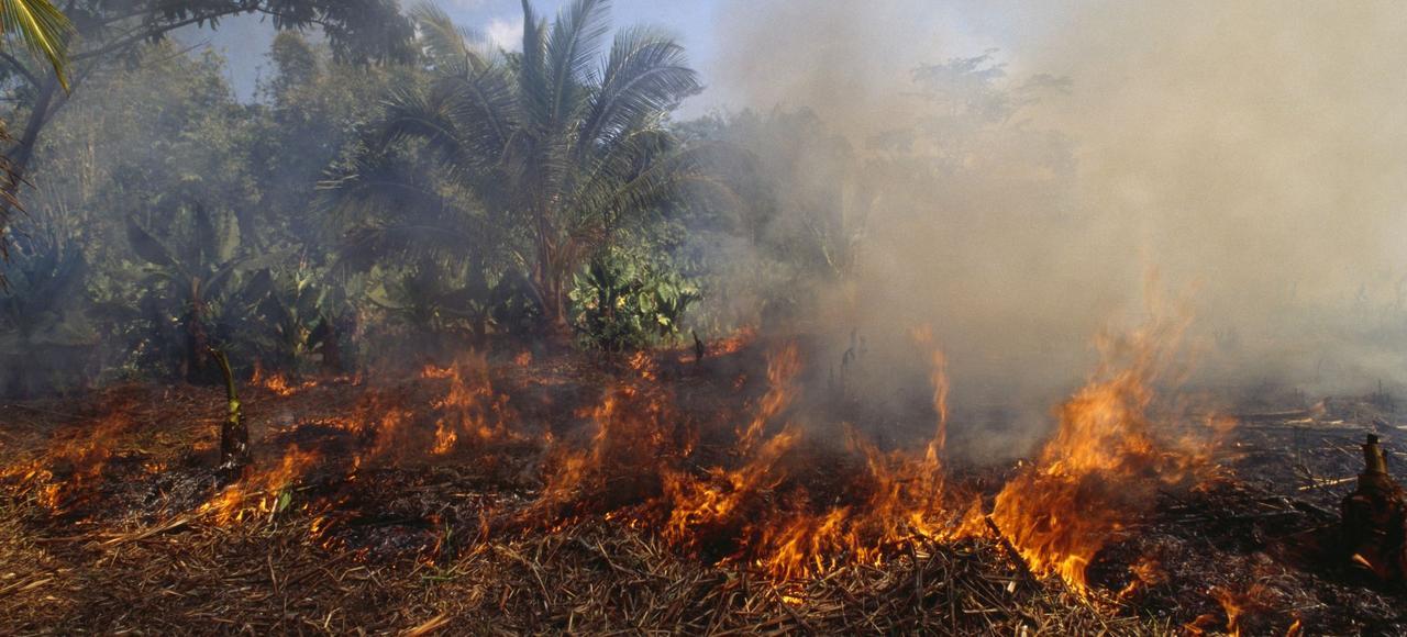 L'agriculture sur brûlis est en grande partie responsable de la disparition d'un million d'hectares de forêt malgache en moins de huit ans.