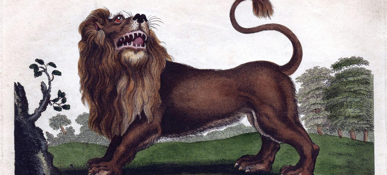 <i>Lion</i>, par Johann Ihle. Illustration tirée de l'ouvrage <i>Universal System of Natural History</i> , d'Ebenezer Sibly (1794-1796).
