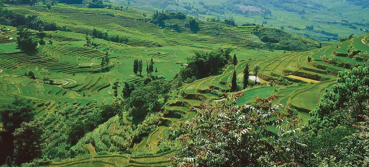 Rizières en terrasse dans le Yuanyang, une région très reculée du sud-ouest de la Chine, à plus de 7 heures de l'aéroport le plus proche.