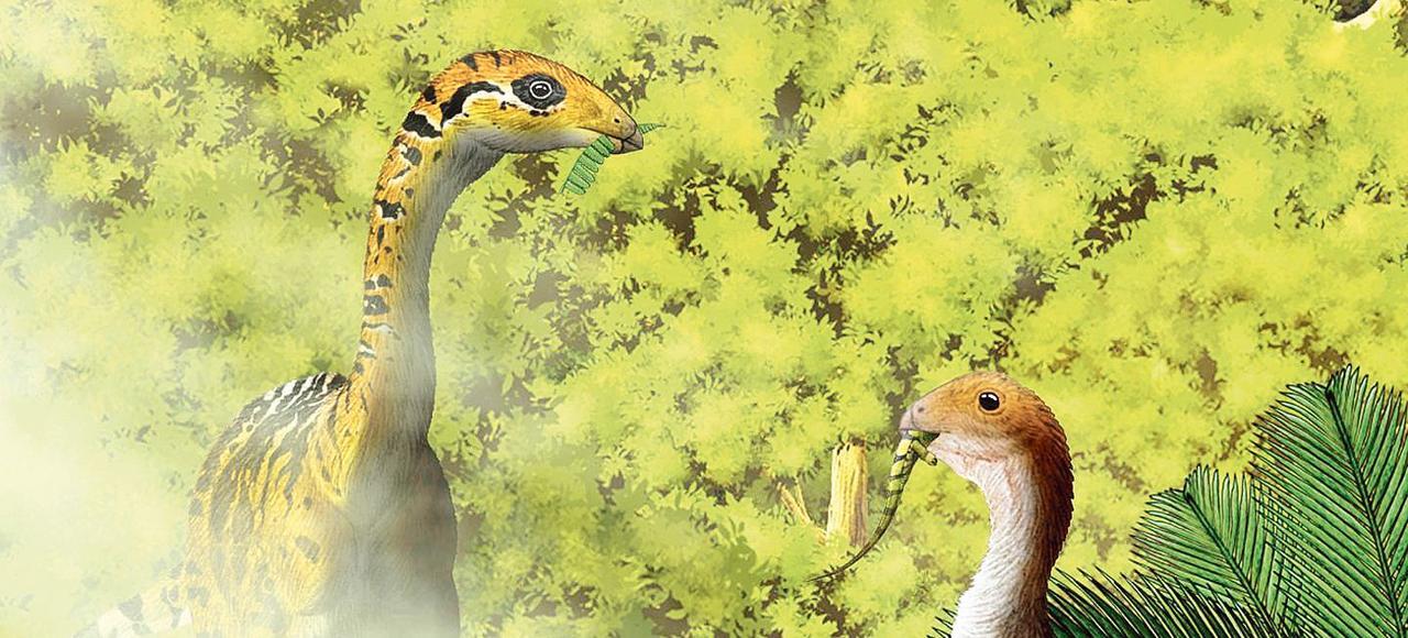 La mâchoire du Limusaurus inextricabilis, qui appartient au groupe des dinosaures théropodes dont sont issus les oiseaux, se transforme en bec à l'âge adulte.