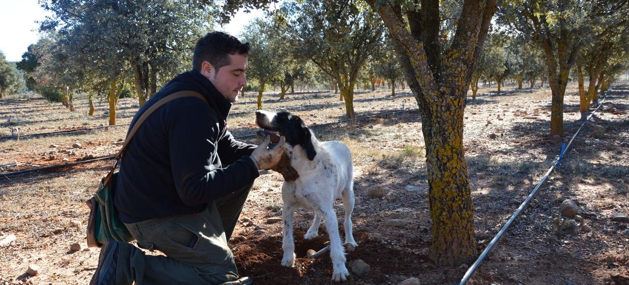 Avec sa chienne Blanca, Manuel Doñate a ramassé, dans la matinée du 28 décembre, deux kilos de Tuber melanosporum sur les 100 hectares qu'il possède à Sarrion, petit village d'Aragon, perdu entre Valence et Saragosse.