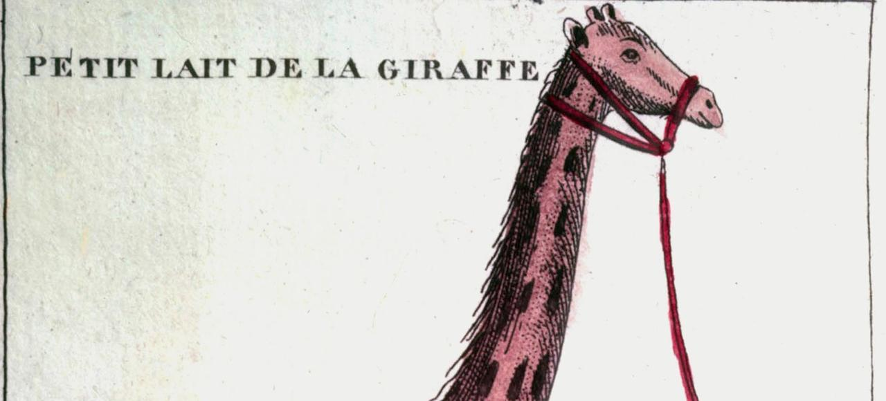 Zarafa, la célèbre girafe du Jardin des Plantes, vers 1830.