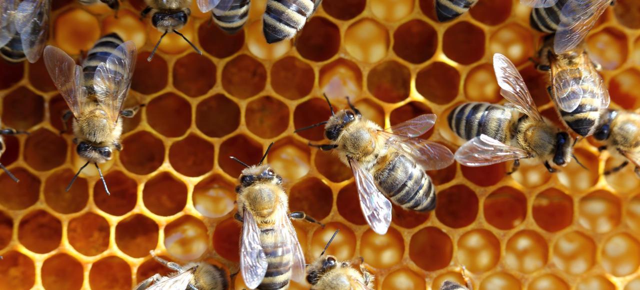 Le taux de mortalité des ruches domestiques, dont l'activité de pollinisation est cruciale pour de nombreuses cultures, a pu atteindre 25% certaines années en France.