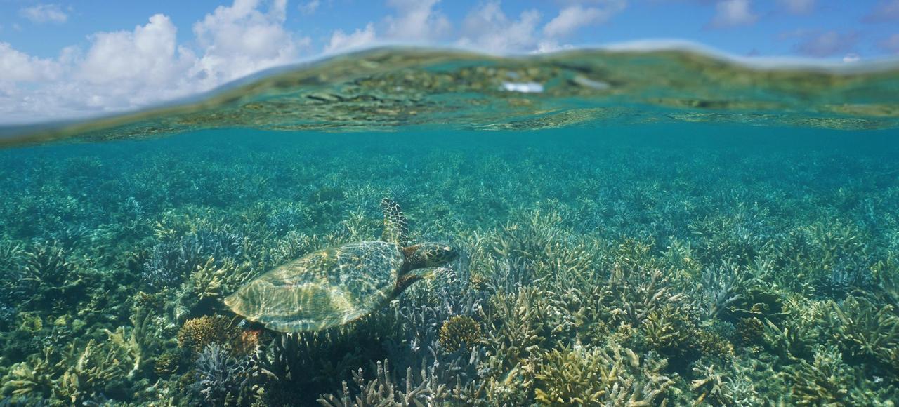 Le parc de la mer de corail couvre l'ensemble de l'espace maritime de la Nouvelle-Calédonie, soit 1,3million de km².