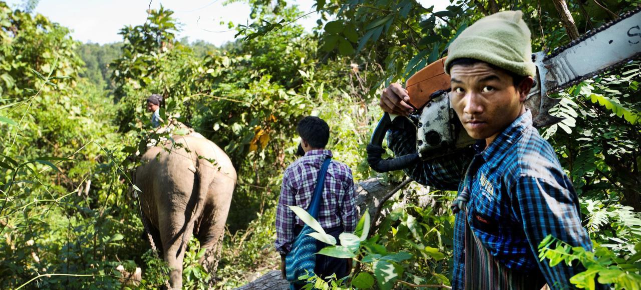 En Birmanie avec les contrebandiers du teck