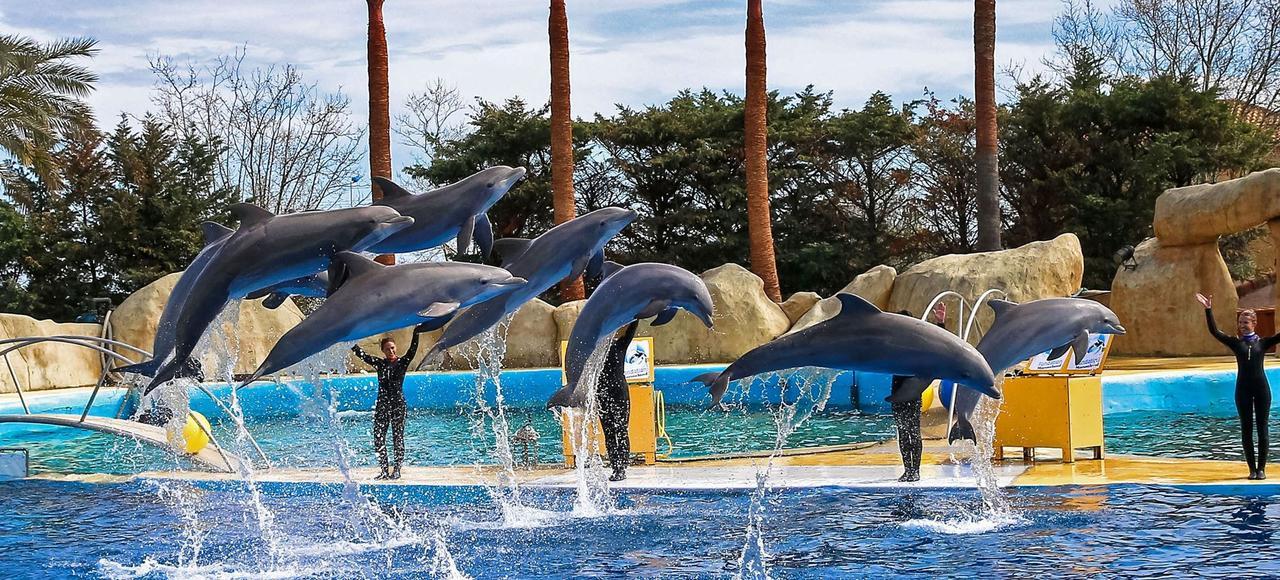 Des dresseurs présentent un spectacle de dauphins, en mars 2016, au Marineland d'Antibes.