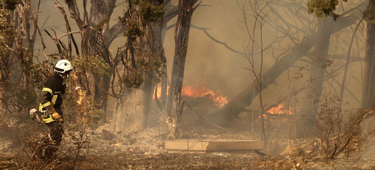 «Le changement climatique produit beaucoup de dépérissement d'espèces. Des arbres, arbustes ou plantes s'assèchent, ce qui accentue la puissance des feux»