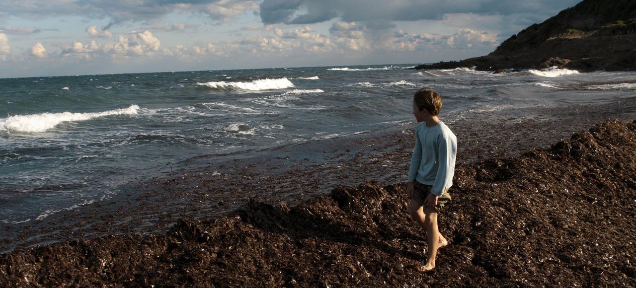 Les banquettes de posidonies, espèce protégée, sur la plage de Macinaggio, au cap Corse, préservent de l'érosion.