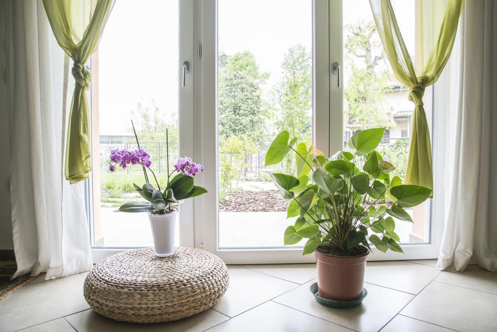 Orchid es plantes vertes cultivez votre jardin int rieur for Plante verte jardin