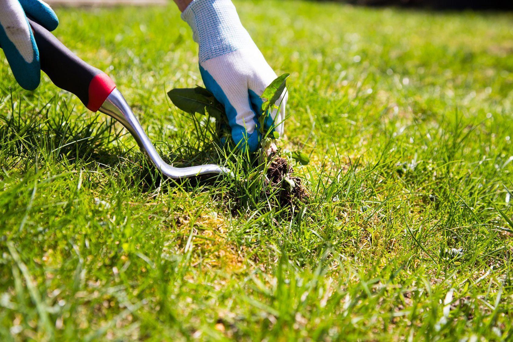 Gazon offrez lui un bon nettoyage de printemps for Nettoyage jardin printemps