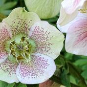 Quelles fleurs planter dans un jardin peu éclairé ?