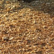 Quel rôle le calcaire joue-t-il dans un sol?