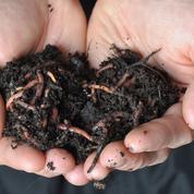 Compost: comment faire revenir les vers de terre?