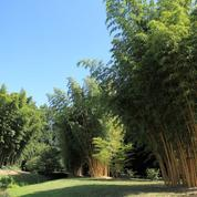 tuer racine de bambou