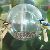 Une mangeoire transparente pour voir les oiseaux festoyer