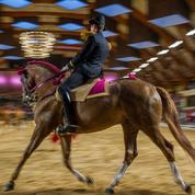 Coûteux et inadapté, l'institut français du cheval est sur la sellette