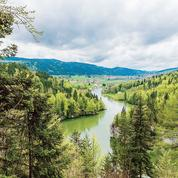 La forêt n'est pas toujours l'alliée du climat