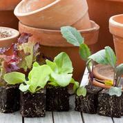 Comment faire pousser des légumes sur son balcon