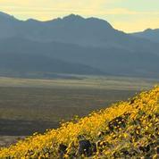 La Vallée de la Mort recouverte de fleurs