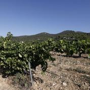 Quatre pistes pour adapter les vins au réchauffement climatique