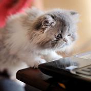 Pourquoi vous devriez amener votre chat (ou chien) au bureau