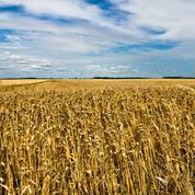 Algérie et Maroc, les plus grands acheteurs de blé français