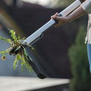 Mauvaises herbes: l'arme fatale