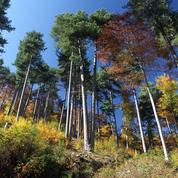 Placements : les vertus fiscales de la forêt
