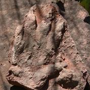 L'empreinte d'un dinosaure a été retrouvée en Espagne