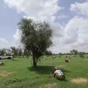 Monique Barbut : «100% des migrants viennent de zones arides»